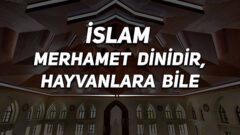 İslam Merhamet Dinidir, Hayvanlara Bile